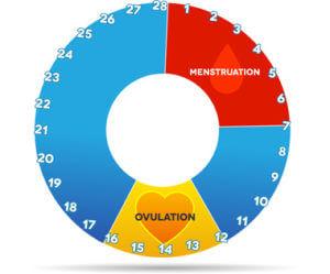 Ovulation fruchtbare Tage berechnen - ovulationstest-schwangerschaftstest.de